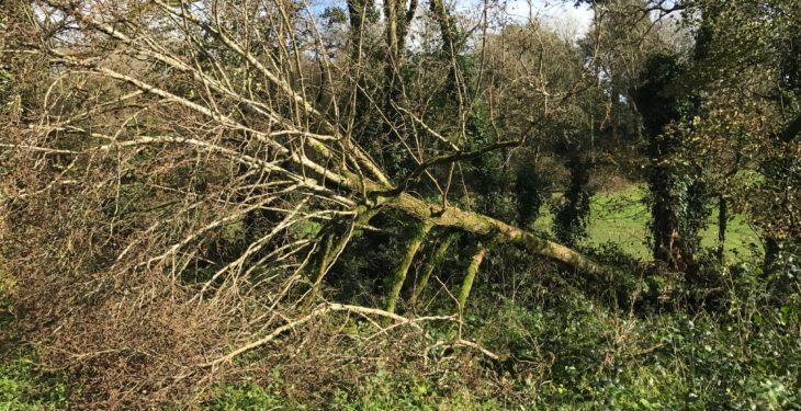 Storm Callum: 30,000 without power as warning remains in west