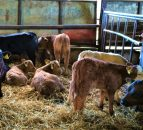 BVD testing: Where do the latest figures stand?