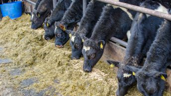 Dairy advice: Keeping calves healthy; first milk recording; and reaching target weights