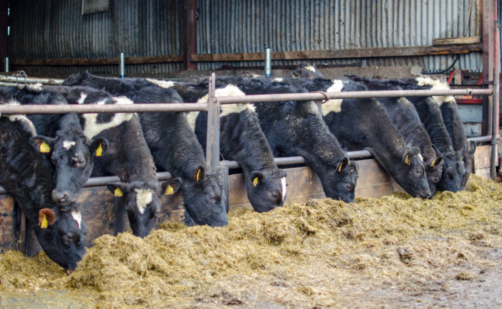 Co-ops monitor fodder situation as farmers criticise Government response