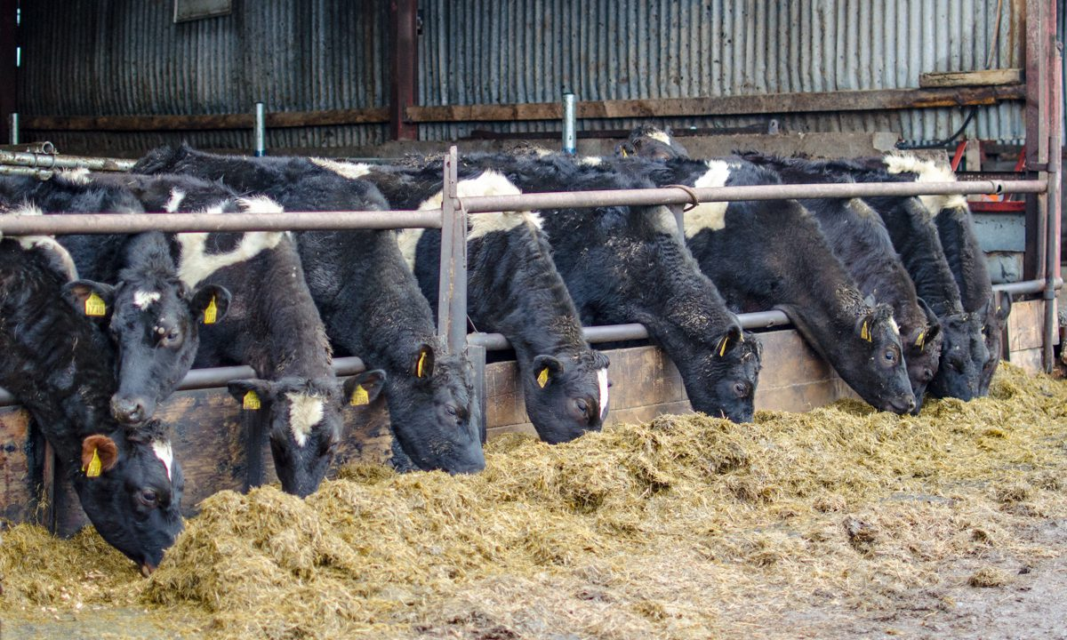 As the calving season winds down, here are some jobs to tick off your to do list