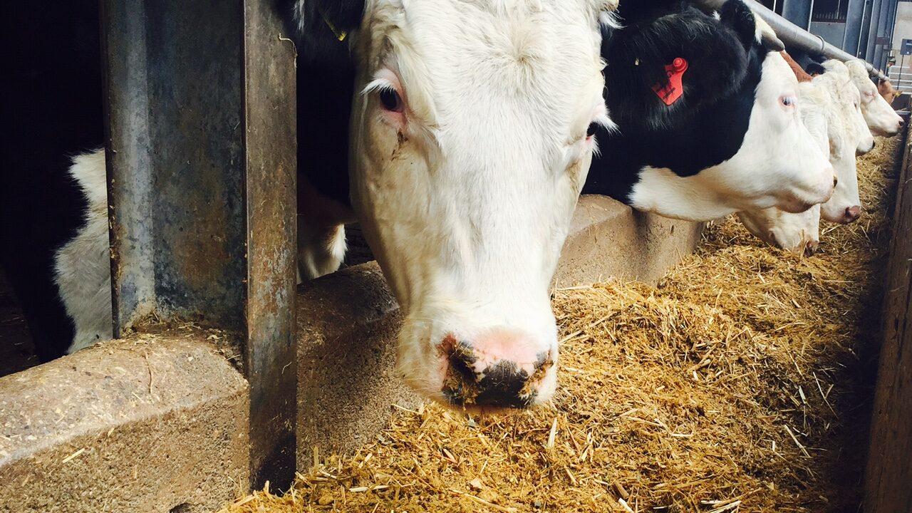 No-deal Brexit 'potentially devastating' to UK's livestock sectors