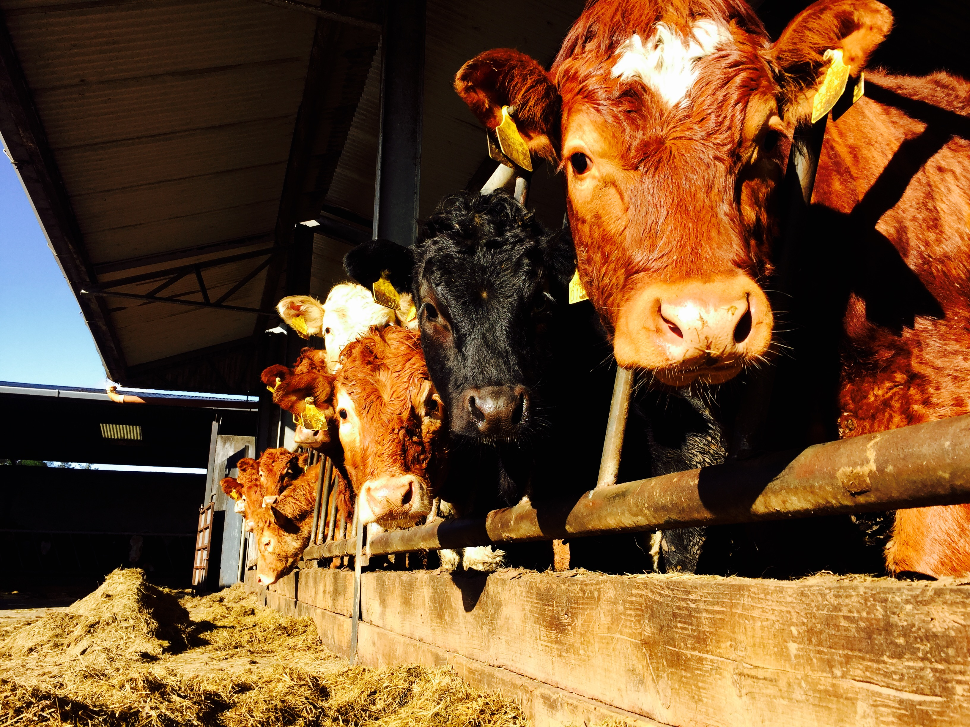 Bord Bia slams 'wilfully malicious' report by Dutch animal rights group