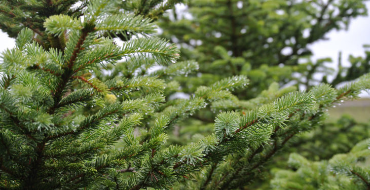 'Leitrim a national sacrifice zone for Sitka Spruce' – Harkin