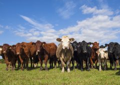 Beef breed societies meet to discuss concerns