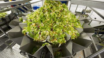 Salad giant Willowbrook secures €2.5m of additional business in ROI