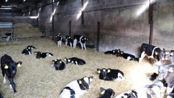 New ferry could more than double Irish calf export capacity