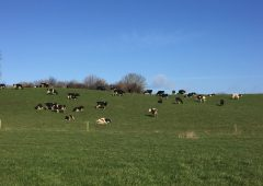 Dairy focus: The first day at grass in Co. Westmeath