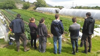 Apprentice organic growers sought for internship programme