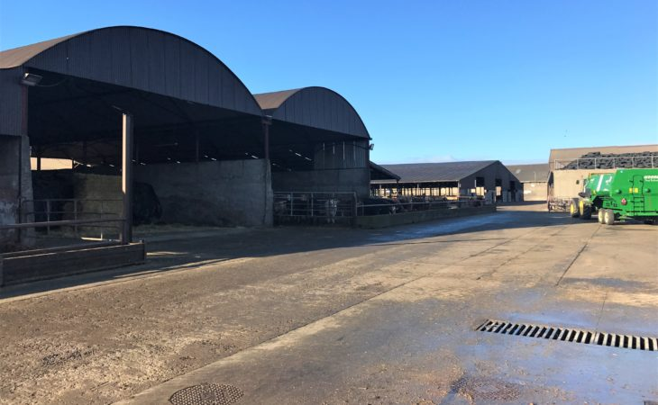 Beef focus: Finishing 3,500 head of cattle on one of Ireland's largest feedlots