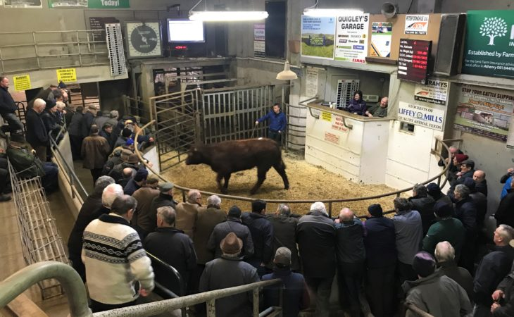 Ballinasloe Mart: Pics and prices from heifer and bullock sale