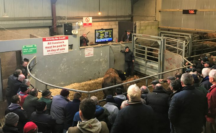 Ballyjamesduff Mart: Top price of €2,600 achieved by cow and calf pairing