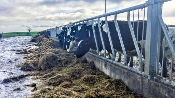 Dairy focus: Scottish man develops 350-cow unit in Co. Westmeath