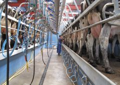 Stark warning issued by dairy industry as peak approaches