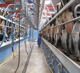 Milk Price Tracker: Prices on up in some co-ops