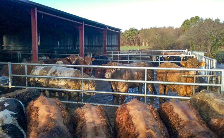 Beef focus: Expanding a suckler-to-beef enterprise on rented land in Co. Kildare