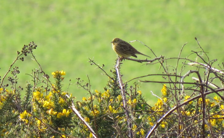 Volunteers sought by RSPB NI for farmland surveys