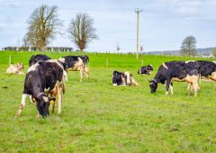 LacPatrick announces held April milk price with top-up boost