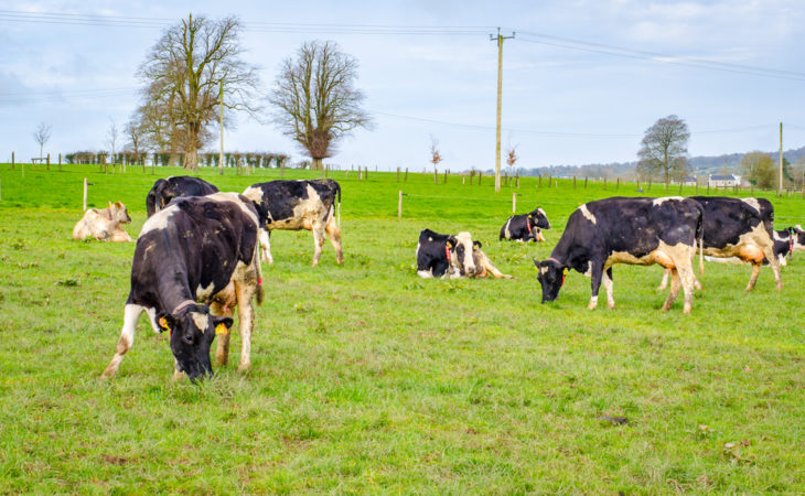 Malaysia is 5% self-sufficient in dairy…Ireland may supply some of this demand