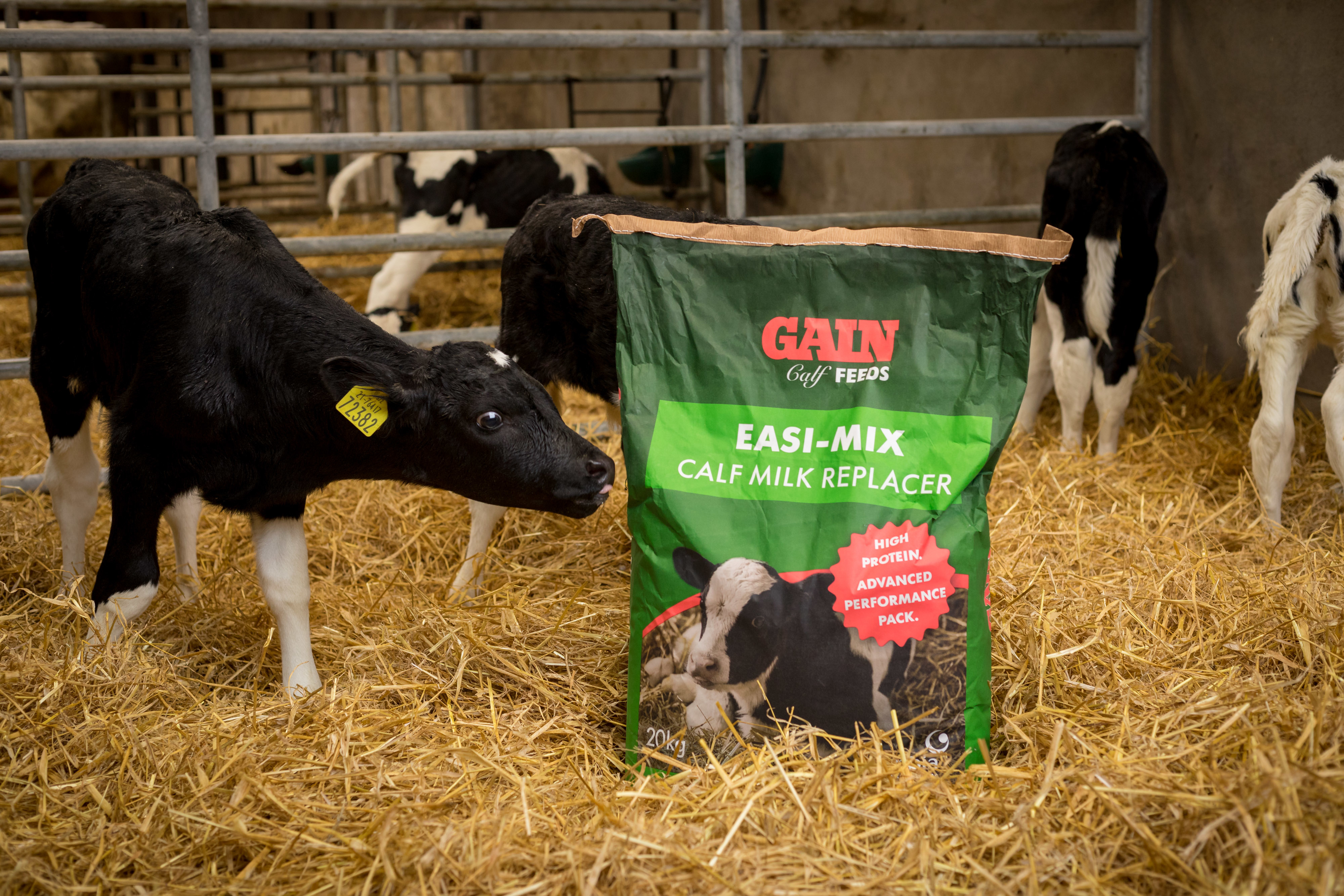 Focusing on calf weight targets and results in Co  Kilkenny