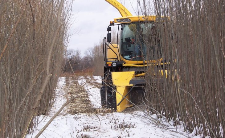 What's the contractor 'price' for harvesting willow?
