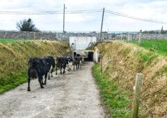 Dairy focus: Two generations drive toward 300 cows in Co. Sligo