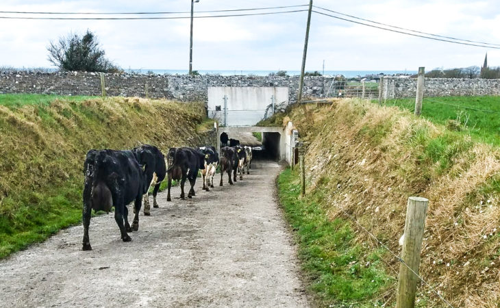 Dairy focus: Two generations drive toward 300 cows in Co. Sligo