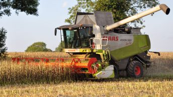 MEPs call for 'robust strategy' to boost protein crops on EU farms