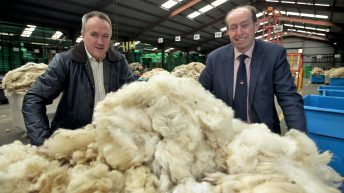 Market diversification: Are natural wool carpets the next niche?