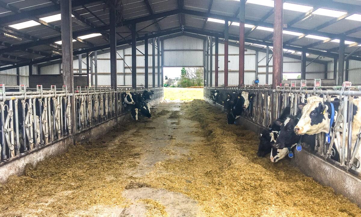 Dairy focus: Dedicated to liquid milk production in Co. Kildare