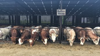 Beef focus: Close to 800 cattle on show at Jalex herd open day