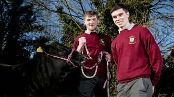 Winners of calf-rearing competition announced