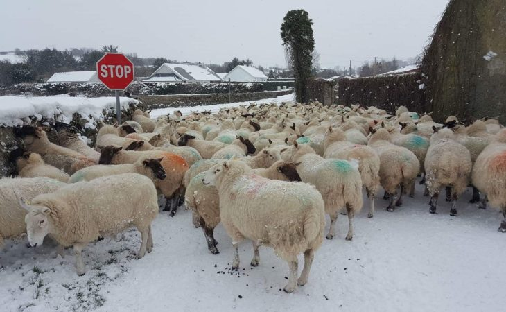 Good grips, high-vis jackets and charged phones 'essential' to post-storm farm repairs