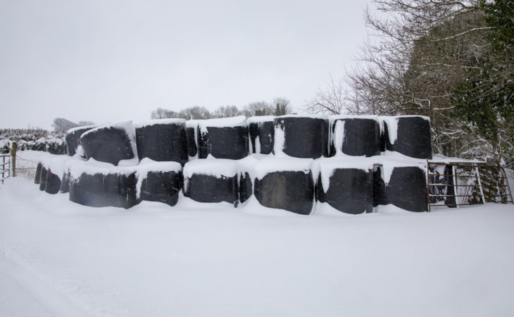 Silage prices: €20-35 quoted for 4X4 round bales