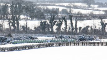 Fresh calls for hedge-cutting deadline to be extended after stormy spell