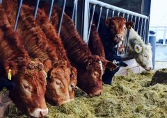 'It is becoming increasingly clear that we cannot feed our cattle and sheep'