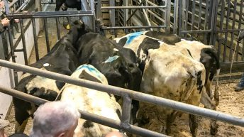 Cattle marts: Improved trade for weanlings and cull cows