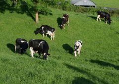 Northern and western dairy farmers lost out on 30 grazing days in 2017