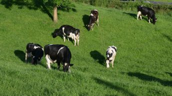 Teagasc in bid to take over vital new dairy plantation in Cork
