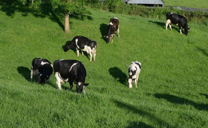 Are you considering dairy farming?