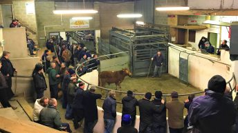 Farmers hear how to protect livelihoods at Knowledge Transfer event in Granard Mart