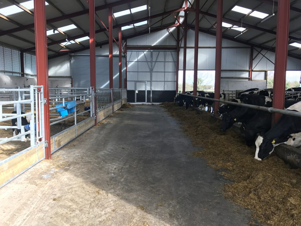 Buildings Focus Inside A 120 000 Cubicle And Calving