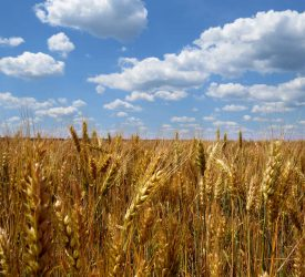 Bord Bia and Teagasc to attend Oireachtas meeting on organic farming