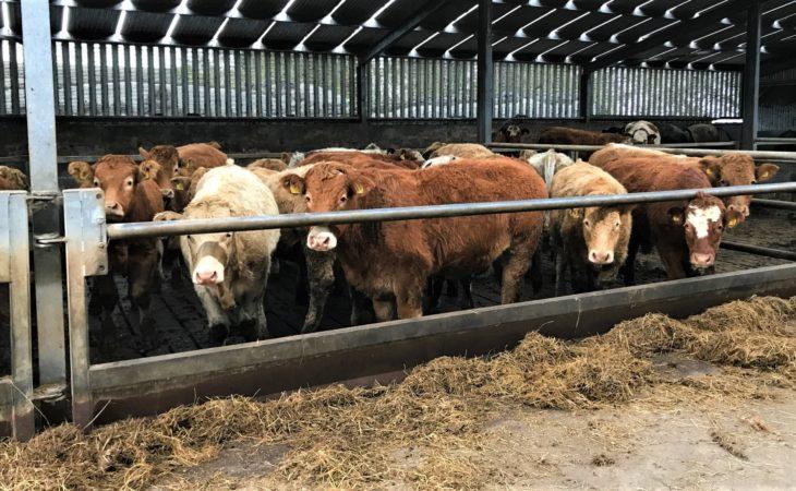 How prevalent was liver fluke in Irish cattle in 2017?