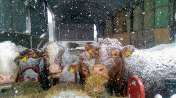 Polar pics: Snowy snapshots of farmers battling blizzards