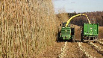New grant scheme to grow willow as an energy crop on the way?