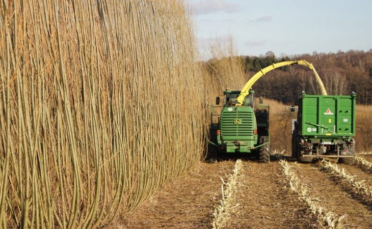 Energy crops are a distraction for Irish farmers