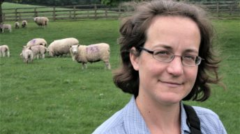 Grass event to help sheep farmers 'play catch up' on a late season