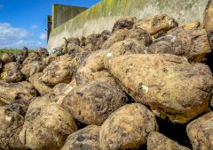 Interview: Details on beet industry revival – 'a rare opportunity'