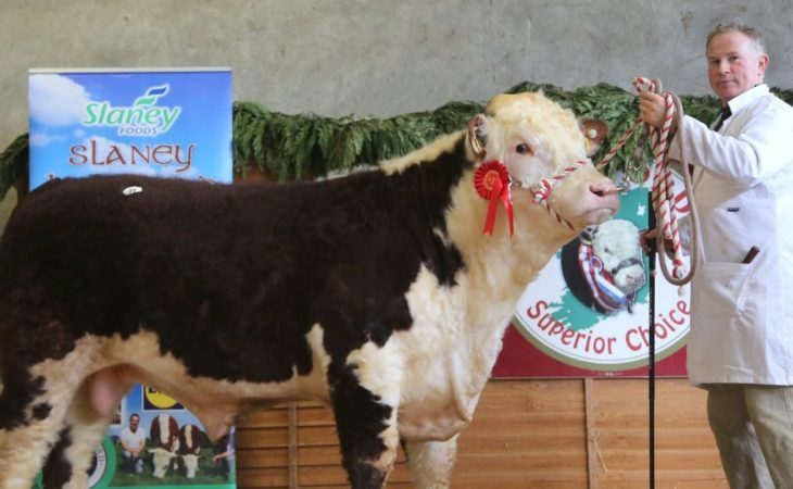 Pics: Herefords hot in demand in Tullamore as bids reach €5,000